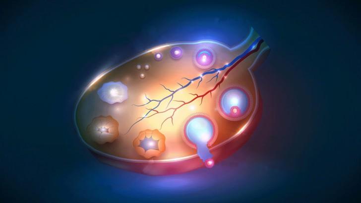 Что такое фолликулы в яичниках у женщин норма