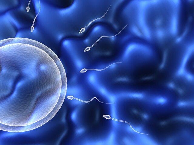 Что такое астенозооспермия и как она влияет на беременность