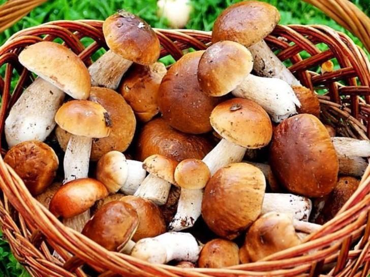 Можно ли грибной суп при беременности